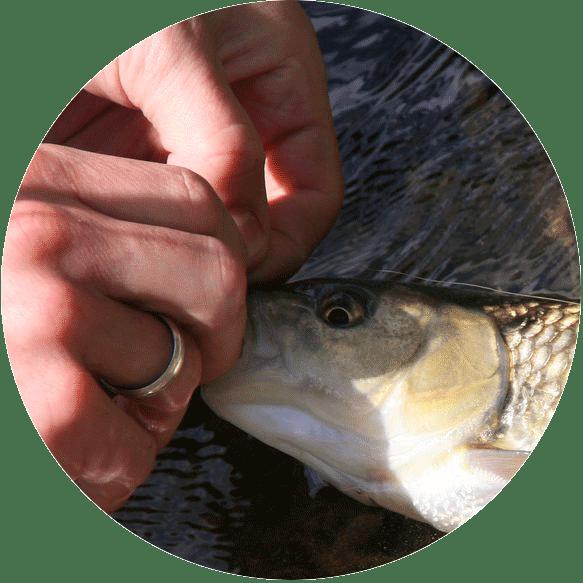 Rette den Fisch Icon