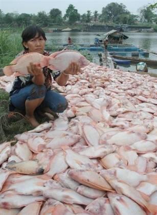 fischsterben-thailand