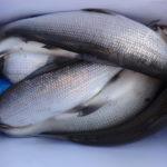 Kollabieren unsere Fischbestände?