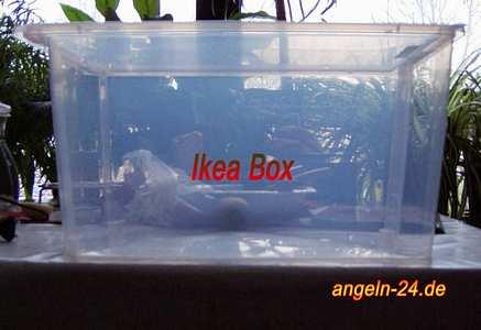 Zanderangeln mit k derfisch raubfisch angeln for Wasserpflanzen ikea